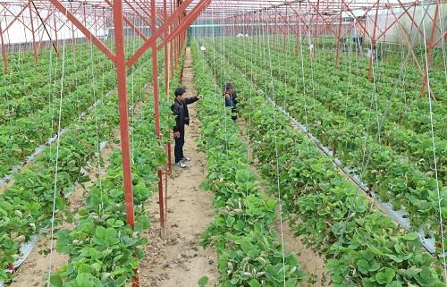 <span>(BKTO) - <i>Tích tụ đất đai là khâu tiền đề trong đột phá phát triển nông nghiệp. Tuy nhiên, đến nay, thực trạng đất sản xuất nông nghiệp của Việt Nam vẫn còn manh mún, phân tán; DN thuê đất để sản xuất nông nghiệp gặp khó khăn</i> <i>do những rào cản về chính sách, tạo thành thách thức lớn trong việc kêu gọi đầu tư vào nông nghiệp, nông thôn.</i></span>    <br><br>Tác giả: <b><span>LÊ HÒA</span></b>