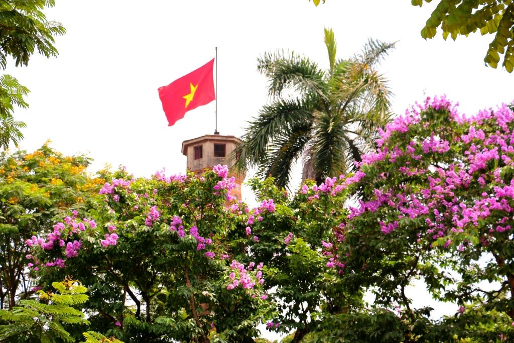 Bằng lăng tím phố phường Hà Nội