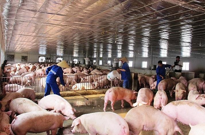 Ngành ngân hàng hỗ trợ, tháo gỡ khó khăn cho khách hàng bị thiệt hại đo dịch tả lợn Châu Phi