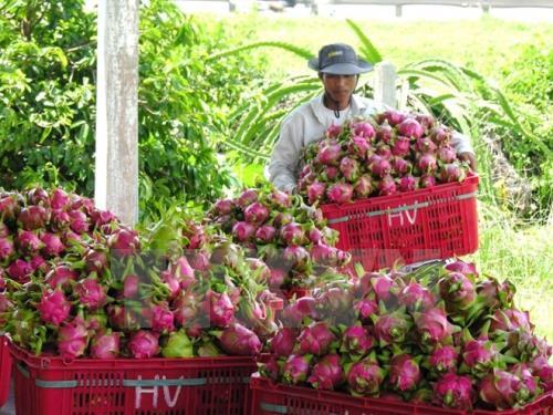Khi Hiệp định EVFTA có hiệu lực, nông sản Việt được hưởng nhiều lợi thế khi xuất khẩu sang EU