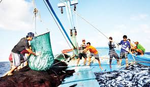 Kiên Giang đầu tư hơn 640 tỷ đồng xây dựng cơ sở hạ tầng kỹ thuật phục vụ nghề cá