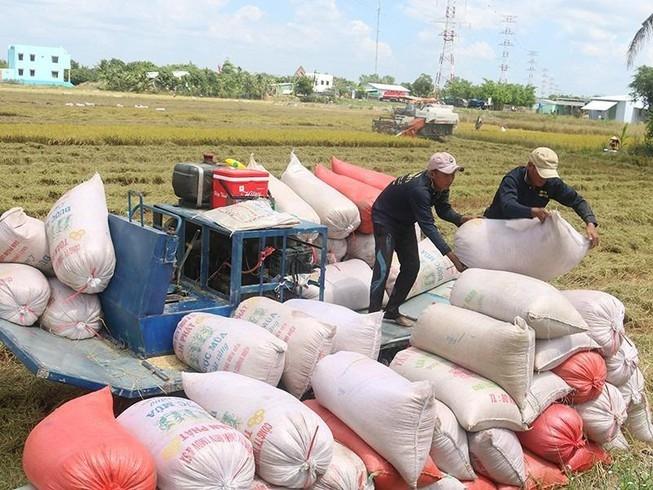 """Giá cao nhất nhiều năm, gạo Việt có cơ hội """"vượt mặt"""" gạo Thái"""