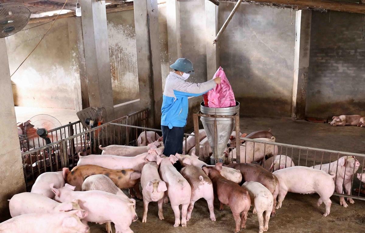 Chính sách hỗ trợ chăn nuôi nông hộ đã góp phần ổn định sinh kế cho người dân