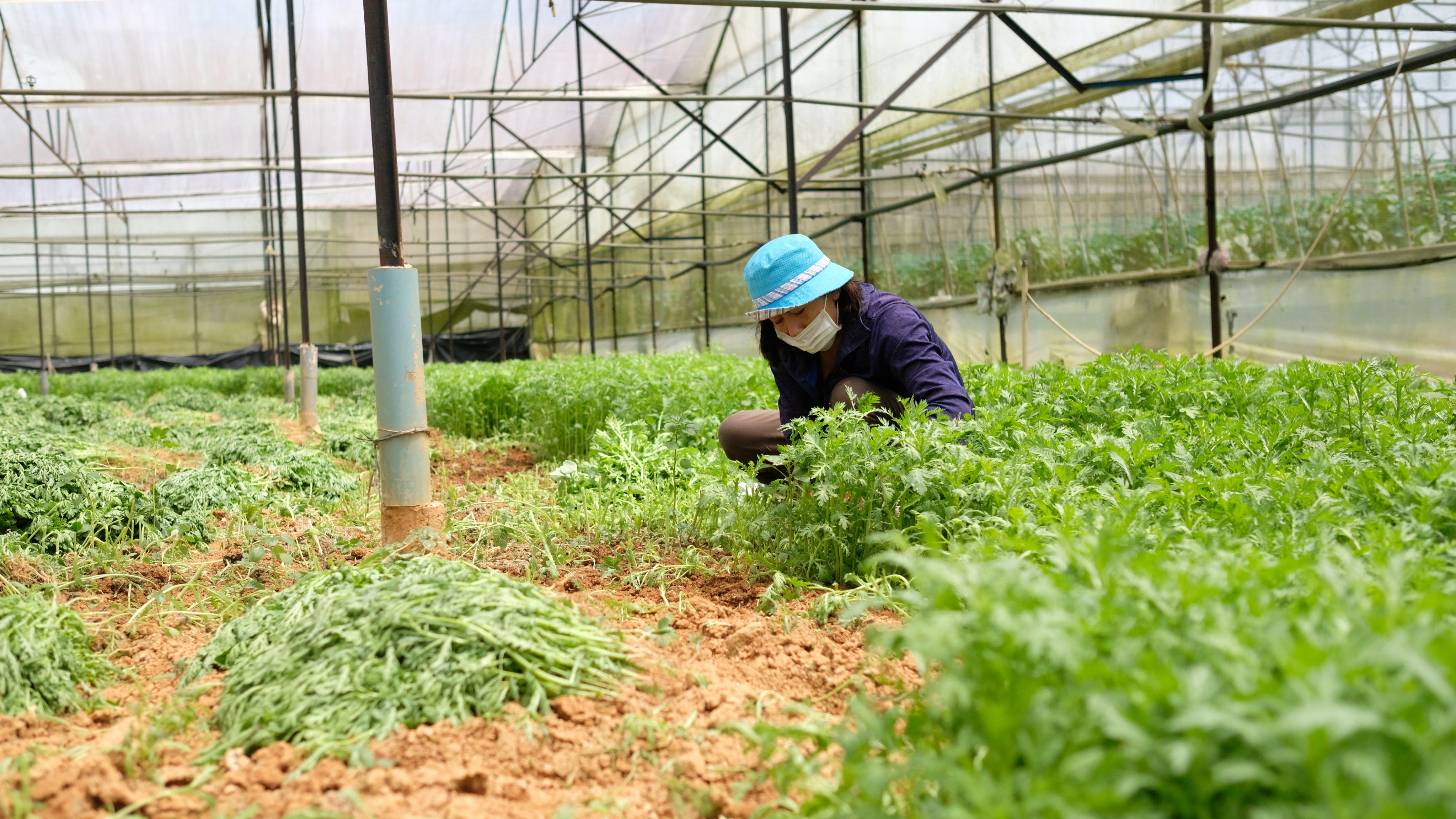 Lâm Đồng cung ứng hơn 2.500 tấn rau củ cho các tỉnh Đông Nam bộ