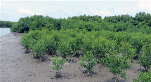 Bảo vệ và phát triển rừng vùng ven biển giai đoạn 2021-2030