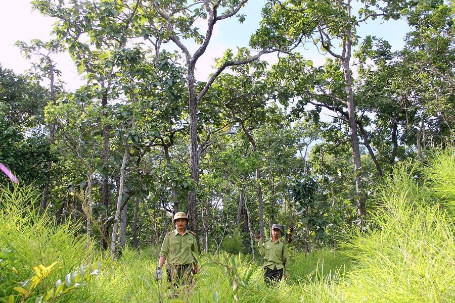 Công tác quản lý, sử dụng đất tại các công ty nông, lâm nghiệp do UBND tỉnh Đắk Lắk quản lý: Kỳ I - Để mất rừng nghiêm trọng