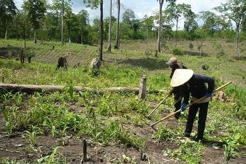 Giải quyết tranh chấp, lấn chiếm đất nông, lâm trường: Vẫn chưa quyết liệt, triệt để