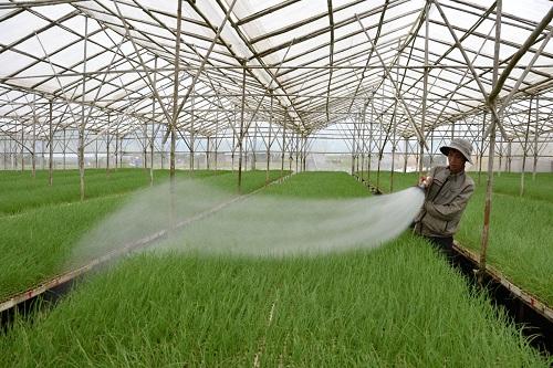 Hạn chế về chính sách đất đai cản trở đầu tư vào nông nghiệp
