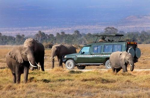 Thổ Nhĩ Kỳ:  NWTF thiếu minh bạch trong sử dụng công quỹ quản lý động vật hoang dã