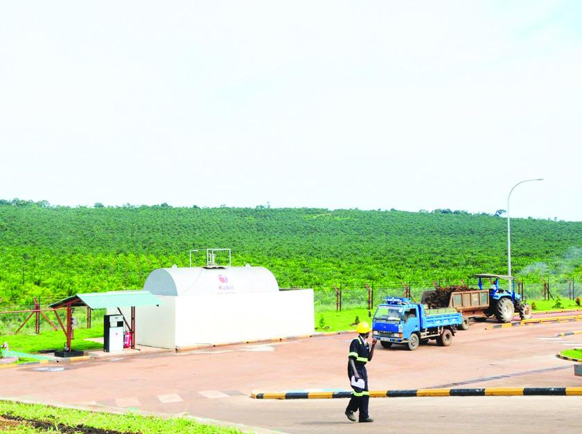 Uganda: Thất thoát hàng triệu USD tại Công ty Dầu cọ