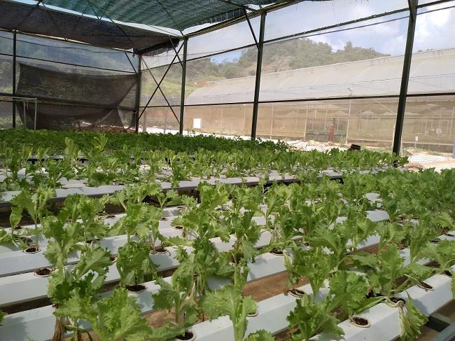 Sắp xếp, đổi mới công ty nông, lâm nghiệp:  Còn nhiều thách thức