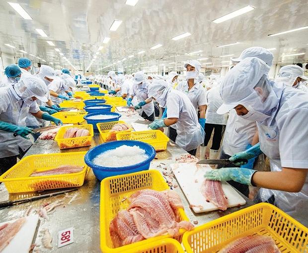 Phát triển chăn nuôi cần gắn với nhu cầu thị trường trong nước và thế giới