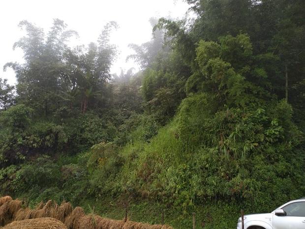 Lũ lụt tại miền Trung - hệ lụy thiên tai từ mất rừng