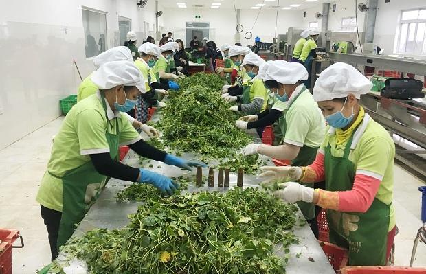 Xuất khẩu nông - lâm - thủy sản bứt phá thành công