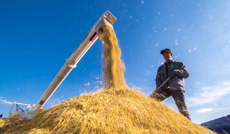 Xuất khẩu gạo của Việt Nam trong năm 2020 vượt 6,1 triệu tấn